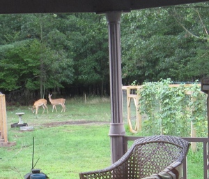 Plenty of Wildlife to be seen from the gazebo