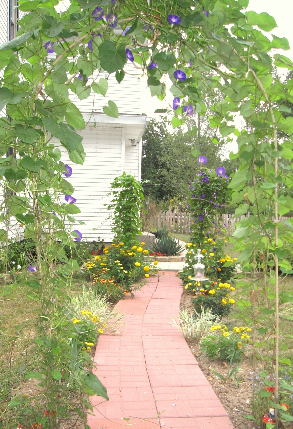 Walk among old-time morning glories and marigolds in your summer approach to Amanda's Bequest.